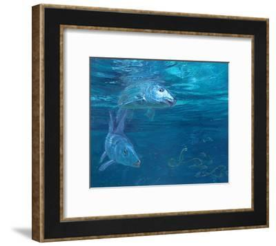 Bonefish Reflecting and Turning: a Bonefish Turns Idly in the Sun-Stanley Meltzoff-Framed Giclee Print