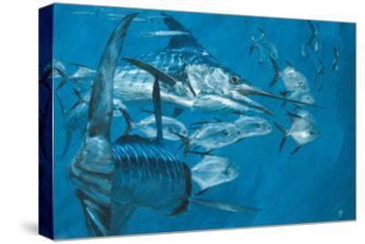 Two Striped Marlin and Pompano, Cabo San Lucas: Striped Marlin Work as a Team to Round Up Pompano-Stanley Meltzoff-Stretched Canvas Print