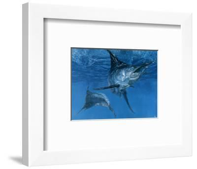 Double Header: Makaira Nigricans, Blue Marlin Inspect Baits While One Devours a Ballyhoo-Stanley Meltzoff-Framed Giclee Print