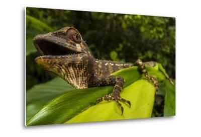 A Lizard in Sri Lanka-Cristina Mittermeier-Metal Print