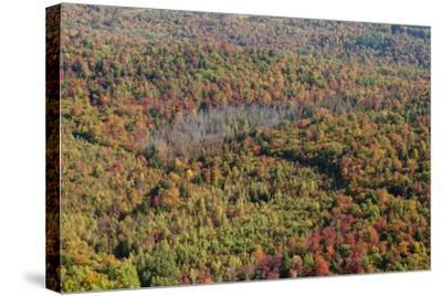Aerial View of a Dense Forest in Central Maine During Autumn-Hannele Lahti-Stretched Canvas Print