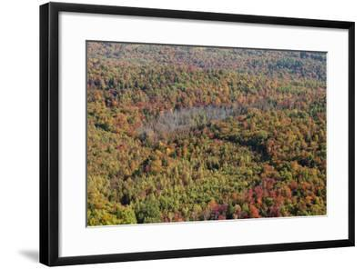 Aerial View of a Dense Forest in Central Maine During Autumn-Hannele Lahti-Framed Photographic Print