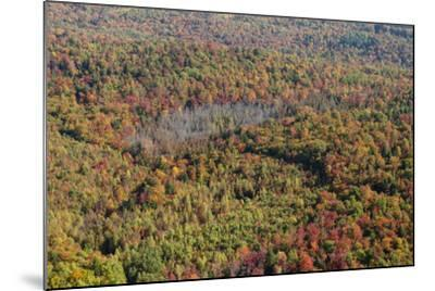 Aerial View of a Dense Forest in Central Maine During Autumn-Hannele Lahti-Mounted Photographic Print