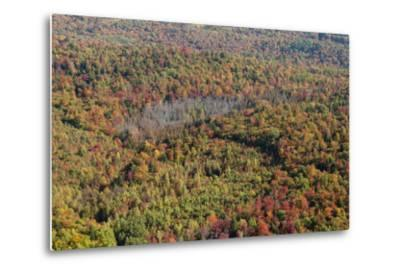 Aerial View of a Dense Forest in Central Maine During Autumn-Hannele Lahti-Metal Print