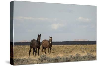 Heat from the Late Summer Sun Distorts and Softens a View of Horses on Blue Moon Bench-Bill Hatcher-Stretched Canvas Print