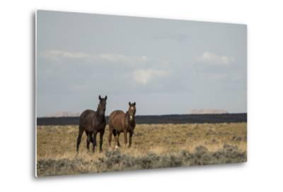 Heat from the Late Summer Sun Distorts and Softens a View of Horses on Blue Moon Bench-Bill Hatcher-Metal Print