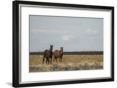 Heat from the Late Summer Sun Distorts and Softens a View of Horses on Blue Moon Bench-Bill Hatcher-Framed Photographic Print