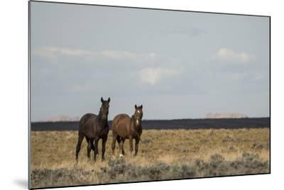 Heat from the Late Summer Sun Distorts and Softens a View of Horses on Blue Moon Bench-Bill Hatcher-Mounted Photographic Print