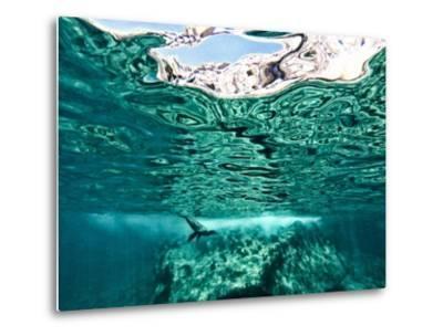 A California Sea Lion, Zalophus Californianus, Swims in Waters Off Los Islotes-Kike Calvo-Metal Print