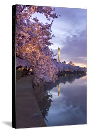 Cherry Trees in Bloom, and the Washington Monument at Twilight-Irene Owsley-Stretched Canvas Print