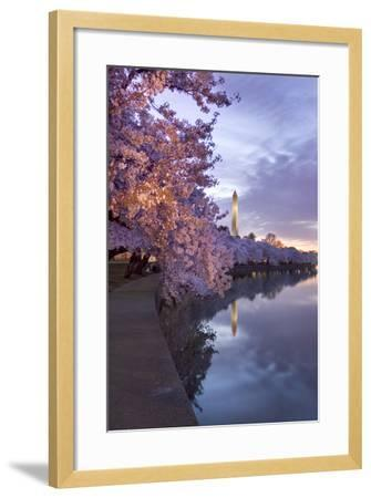 Cherry Trees in Bloom, and the Washington Monument at Twilight-Irene Owsley-Framed Photographic Print