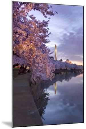 Cherry Trees in Bloom, and the Washington Monument at Twilight-Irene Owsley-Mounted Photographic Print