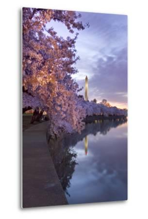 Cherry Trees in Bloom, and the Washington Monument at Twilight-Irene Owsley-Metal Print