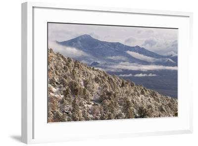 Newly Fallen Snow Along Wheeler Peak Scenic Drive in Great Basin National Park-Phil Schermeister-Framed Photographic Print