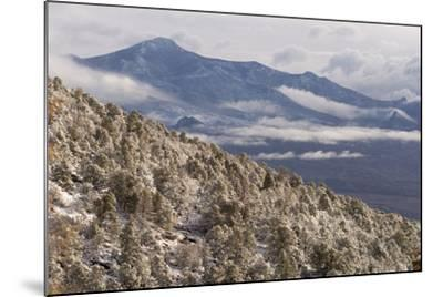 Newly Fallen Snow Along Wheeler Peak Scenic Drive in Great Basin National Park-Phil Schermeister-Mounted Photographic Print