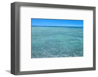 Bonefish Flats No.2: Bonefish Foraging in the Flats-Stanley Meltzoff-Framed Photographic Print