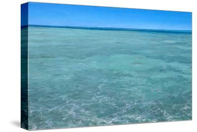 Bonefish Flats No.2: Bonefish Foraging in the Flats-Stanley Meltzoff-Stretched Canvas Print