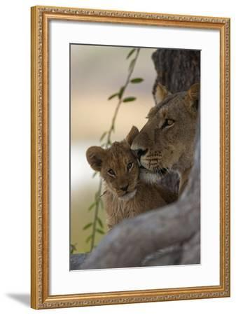 A Lioness Nuzzling Her Cub-Beverly Joubert-Framed Photographic Print