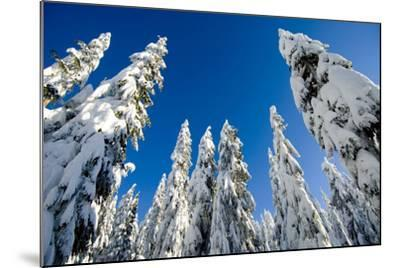 Snow-Laden Trees on Seymour Mountain-Paul Colangelo-Mounted Photographic Print