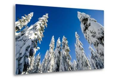 Snow-Laden Trees on Seymour Mountain-Paul Colangelo-Metal Print