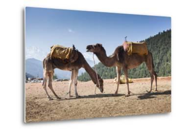 Camels on the Side of a Road in Morocco-Richard Nowitz-Metal Print