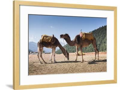Camels on the Side of a Road in Morocco-Richard Nowitz-Framed Photographic Print