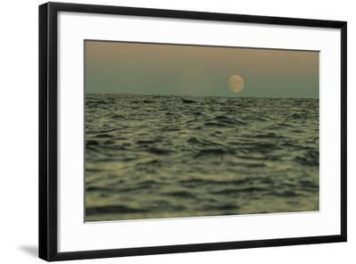 A Whale Swims in Waters Off Lofoten Archipelago-Cristina Mittermeier-Framed Photographic Print