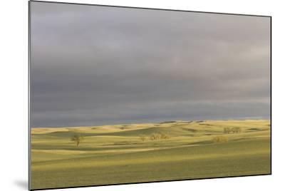 A Thunderstorm Above Oglala National Grassland in Nebraska-Phil Schermeister-Mounted Photographic Print