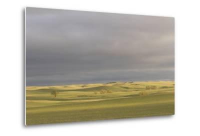 A Thunderstorm Above Oglala National Grassland in Nebraska-Phil Schermeister-Metal Print