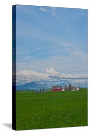 A Family Farm Sits Amid Wheat Fields Near Great Falls, Montana-Gordon Wiltsie-Stretched Canvas Print