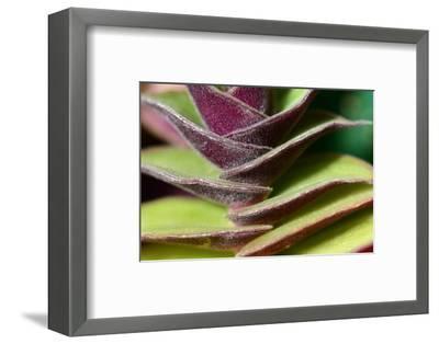 Close Up of a Distichous Plant, Possibly Tradescantia-Darlyne A^ Murawski-Framed Photographic Print
