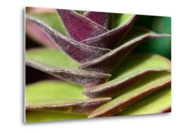 Close Up of a Distichous Plant, Possibly Tradescantia-Darlyne A^ Murawski-Metal Print