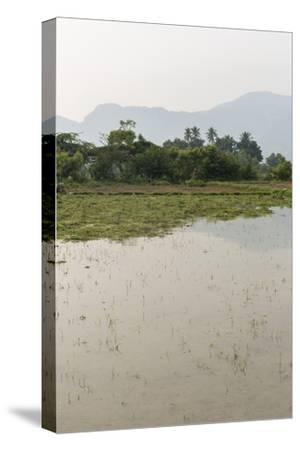 Plants Grow in the Shallow Water of a Farm in Rural India-Kelley Miller-Stretched Canvas Print