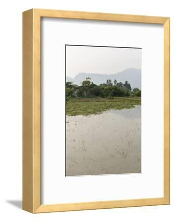 Plants Grow in the Shallow Water of a Farm in Rural India-Kelley Miller-Framed Photographic Print