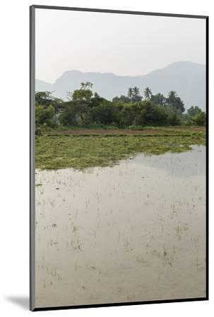Plants Grow in the Shallow Water of a Farm in Rural India-Kelley Miller-Mounted Photographic Print