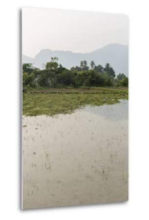 Plants Grow in the Shallow Water of a Farm in Rural India-Kelley Miller-Metal Print