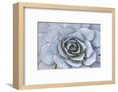 Close Up of a Succulent Plant-Macduff Everton-Framed Photographic Print