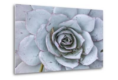 Close Up of a Succulent Plant-Macduff Everton-Metal Print