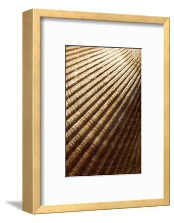 Patterns of a Seashell-Paul Colangelo-Framed Photographic Print