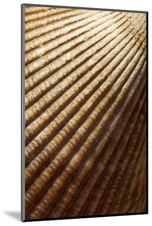 Patterns of a Seashell-Paul Colangelo-Mounted Photographic Print