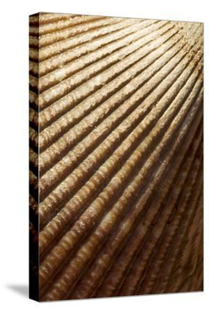 Patterns of a Seashell-Paul Colangelo-Stretched Canvas Print