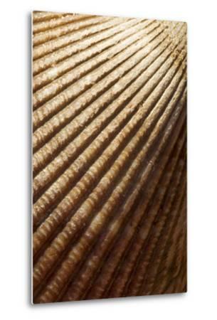 Patterns of a Seashell-Paul Colangelo-Metal Print