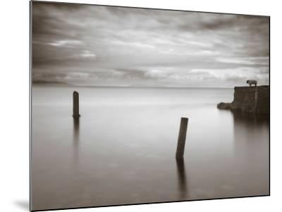 Jumptune-David Baker-Mounted Photographic Print