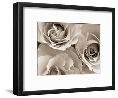 Three White Roses-Robert Cattan-Framed Photographic Print
