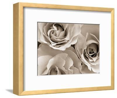 Three White Roses-Robert Cattan-Framed Photographic Print