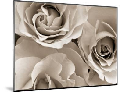 Three White Roses-Robert Cattan-Mounted Photographic Print