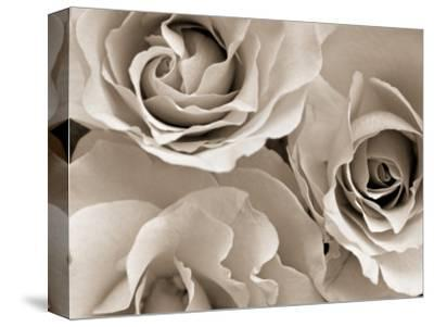 Three White Roses-Robert Cattan-Stretched Canvas Print