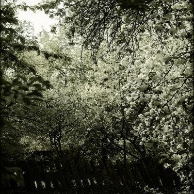 Trees along Fence in Bloom-Ewa Zauscinska-Framed Photographic Print
