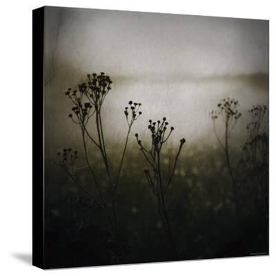Study of Stems-Ewa Zauscinska-Stretched Canvas Print
