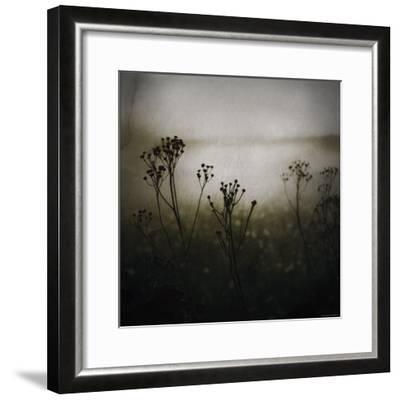 Study of Stems-Ewa Zauscinska-Framed Photographic Print